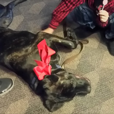 dog holiday stress relief
